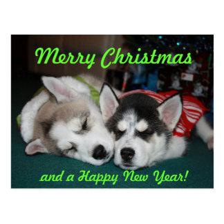 Postal del perrito del husky siberiano