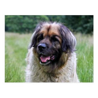 Postal del perro de Leonberger