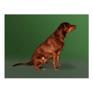 Postal del perro del labrador retriever