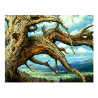 Postal del pino de Bristlecone