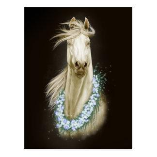 postal del retrato del caballo blanco