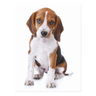 Postal del saludo del perro de perrito del beagle