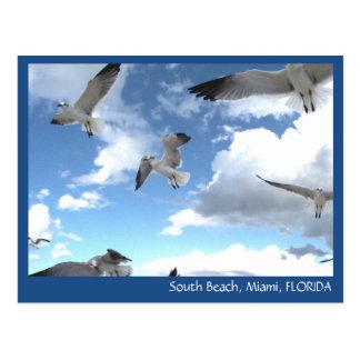 Postal del sur de las gaviotas de Miami la Florida