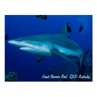 Postal del tiburón del filón