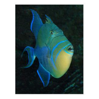 Postal del Triggerfish de reina