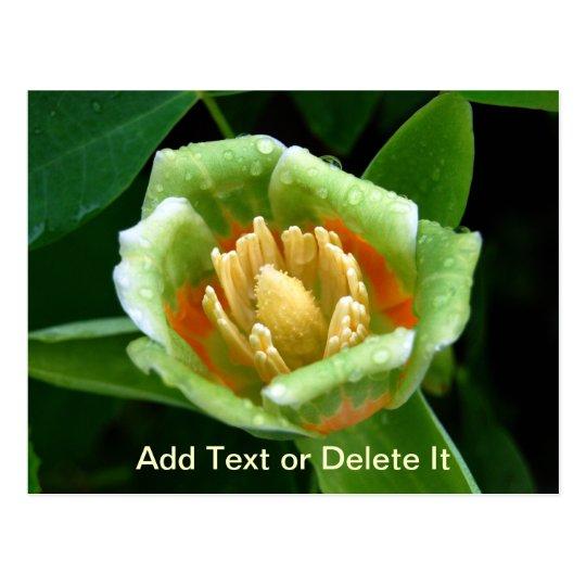 Postal del tulipán del árbol de álamo