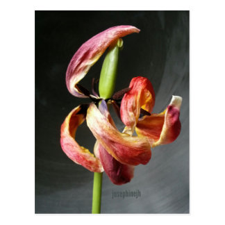 postal del tulipán del baile de Artisitc del