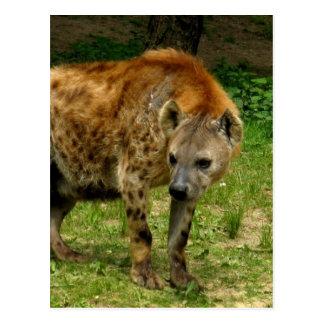 Postal del vagabundeo del Hyena