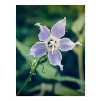 Postal del Wildflower del Bellflower alto