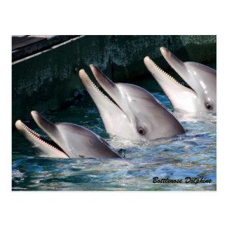 Postal Delfín de Bottlenose