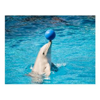 Postal Delfín que tiene una bola