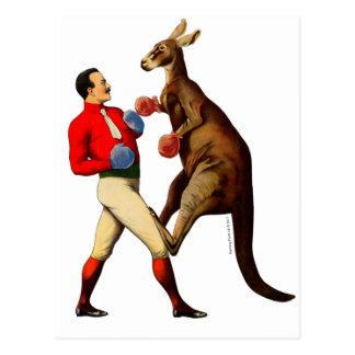 Postal Deporte del boxeo del boxeador del canguro del
