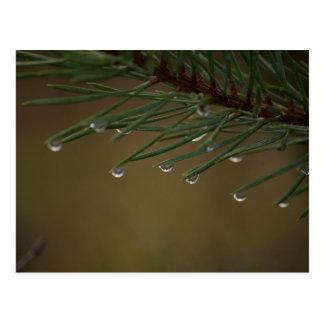 Postal Descensos del árbol de pino