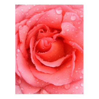 Postal Descensos rosados románticos del agua color de