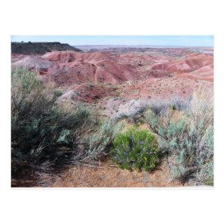 Postal Desierto pintado