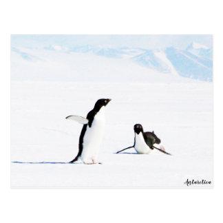 Postal Desplazamiento del pingüino y del amigo de Adelie