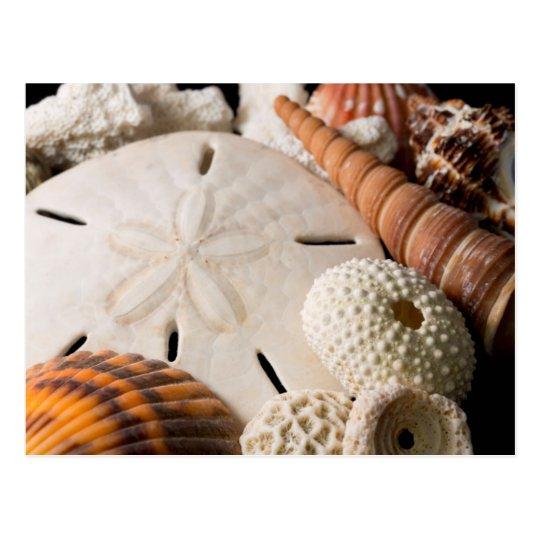 Postal Detalle de Seashells de alrededor del mundo