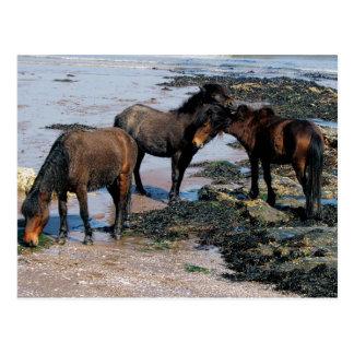 Postal Devon del sur tres potros de Dartmoor que juegan