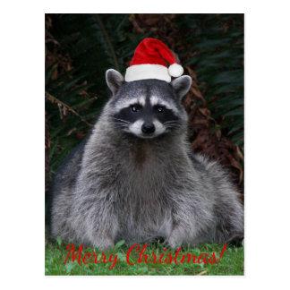 Postal Día de fiesta de la foto del mapache del navidad