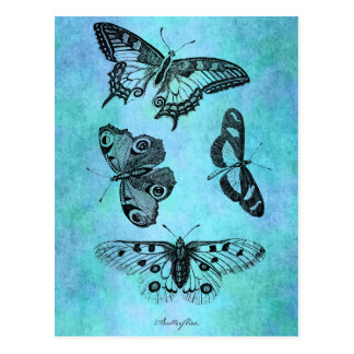 Postal Dibujo azul de la mariposa del trullo del vintage