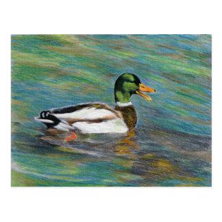 Postal Dibujo de lápiz coloreado pato del pato silvestre