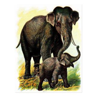 Postal Dibujo del vintage: Elefante de la madre con el
