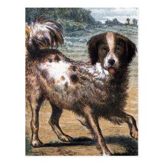 Postal Dibujo del vintage: Un perro perdido