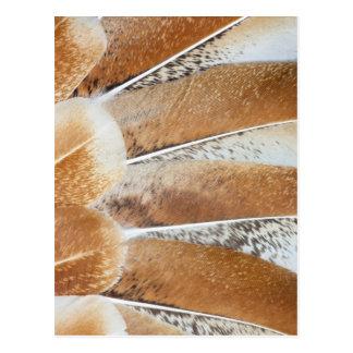 Postal Diseño avivado pluma de Turquía