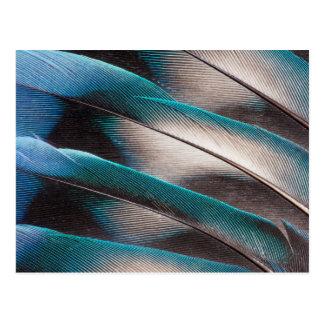 Postal Diseño azul de la pluma de pájaro del amor