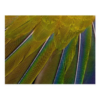 Postal Diseño de la pluma de Jenday Conure