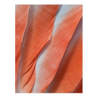 Postal Diseño de la pluma del Cockatoo rosado