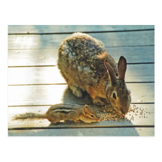 Postal Distribución del conejito y del Chipmunk