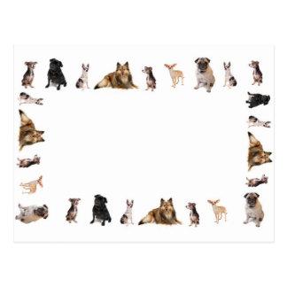 Postal Diversas razas del perro en una fila