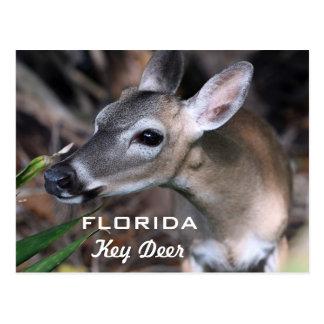 Postal dominante de los ciervos de la Florida,