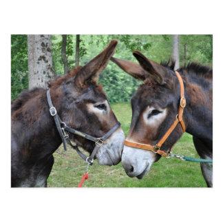 Postal Dos burros amistosos