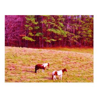 Postal Dos caballos pintados