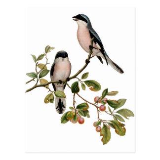 Postal - dos pájaros
