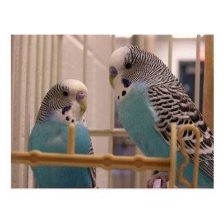 Postal Dos Parakeets