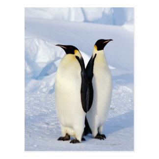 Postal Dos pingüinos de emperador en la Antártida
