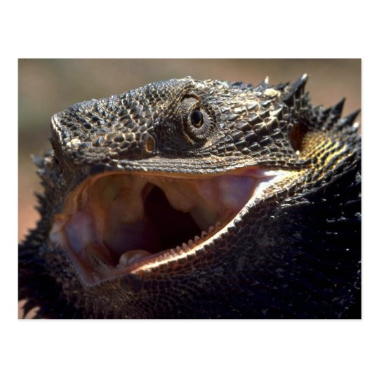 Postal Dragón barbudo, Australia