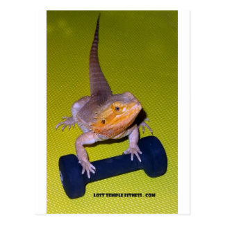 Postal dragón barbudo que ejercita con pesa de gimnasia