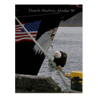 Postal Eagle calvo encaramado en una línea de amarre,