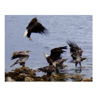 Postal Eagles calvo en la playa, isla de Unalaska