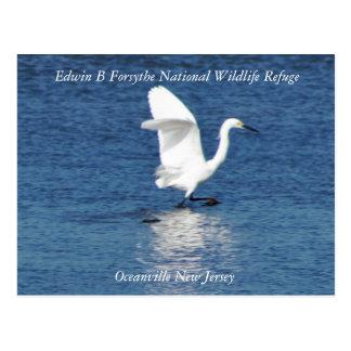 Postal Egret en el refugio