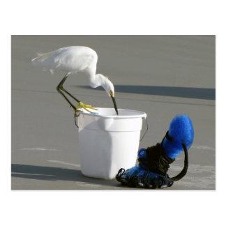 Postal Egret nevado en un cubo del cebo