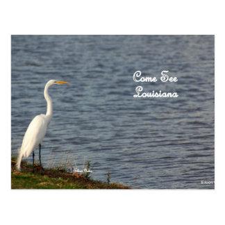 Postal Egret que le invita a que venga a Luisiana