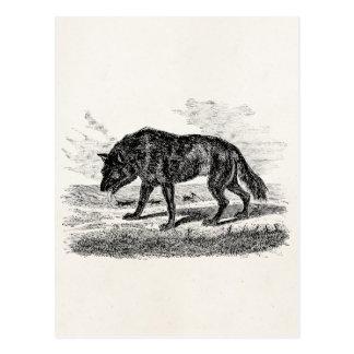 Postal Ejemplo americano de los lobos de los 1800s del