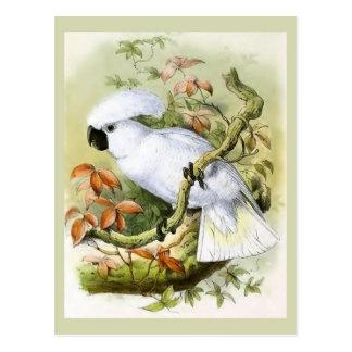 Postal Ejemplo Azufre-Con cresta del vintage del Cockatoo