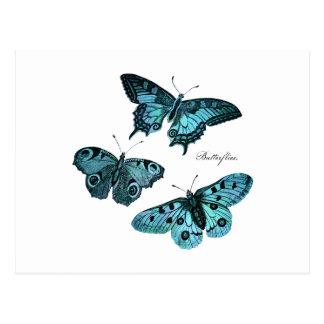 Postal Ejemplo azul verde azulado de la mariposa del