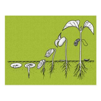 Postal Ejemplo de la germinación de la planta